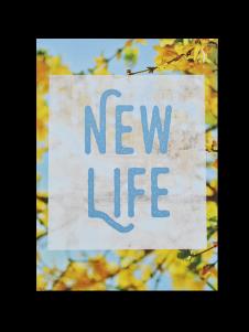 new-life